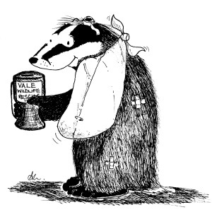 badger and collecting box